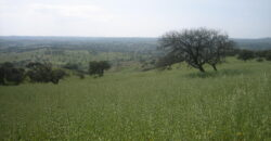 Herdade 21.250Hectares