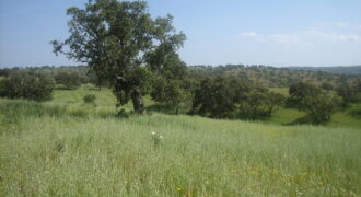 Herdade 5.900 Hectares