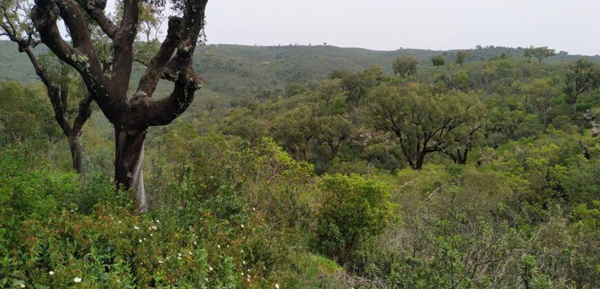 Herdade Sobreiros Eucaliptos